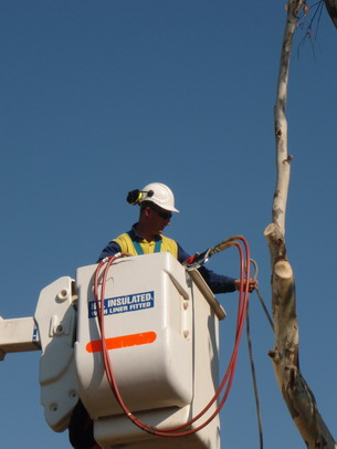 Utility arborist working from an Elevated Work Platform (EWP)