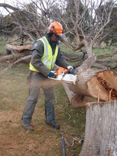 Chain saw course participant learing crosscut