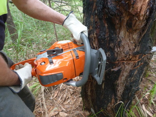 Chainsaw training safe use of saw