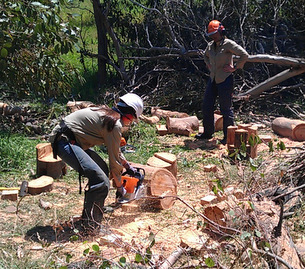 Training female ecologists in safe operation and use of chainsaws near Melbourne