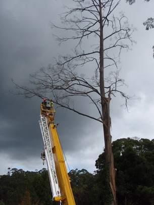 Tree removal by an arborist north of Melbourne using a crane