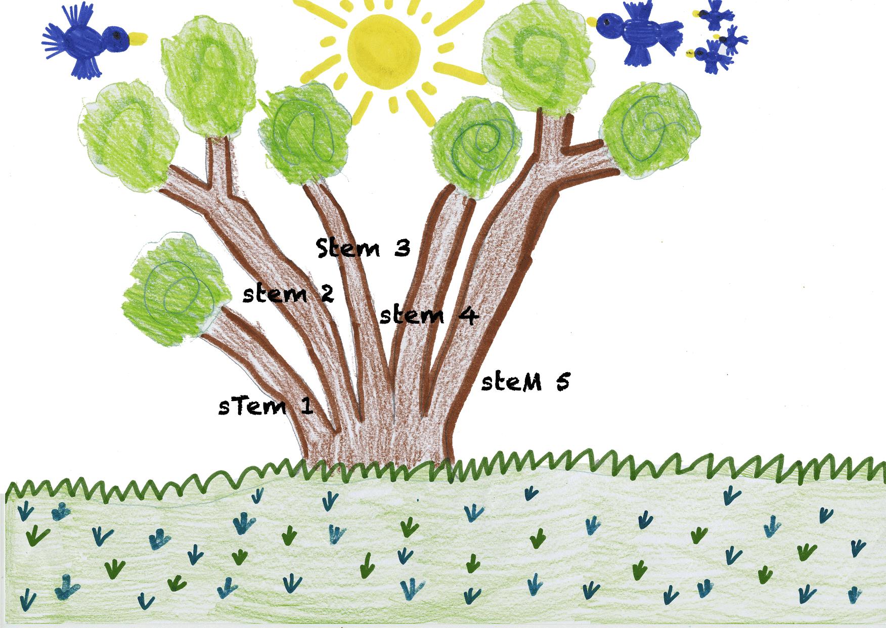 DBH Calculator Arborist Melbourne Environment