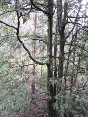 forest camera trap
