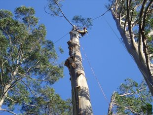 Tree removal in difficult situation, technical dismantling without damaging targets